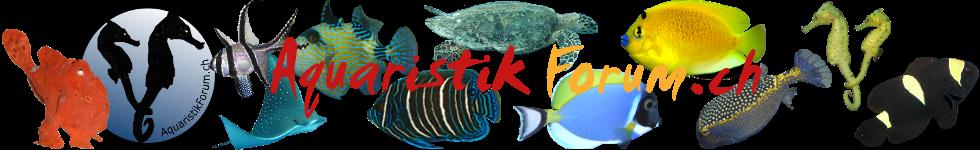 Aquaristikforum.ch